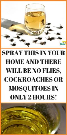 Keeping your home spotless and sorted out isn't basic – it takes a considerable measure of cleaning and care each day, which is tedious and troublesome. Other than looking unsavory, grimy homes pull in bugs, for example, flies, cockroaches and the irritating mosquitoes, which can be exceptionally hard to dispose of.