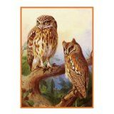 Amazon.com: owl latch hook