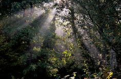 Des forêts de légendes - http://yvon-boelle.com/album/des-forets-de-legendes