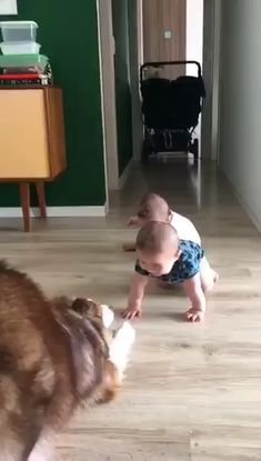 Pls listen with sound on 🐶👶❤️ - Funny Animals Cute Baby Videos, Cute Animal Videos, Funny Animal Pictures, Cute Funny Animals, Cute Baby Animals, Animals And Pets, Funny Babies, Funny Dogs, Cute Babies