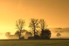 Nebel Landschaft mit Baumreihe bei Sonnenaufgang - Wunderschönes Natur Hintergrundsbild mit Bäumen am Morgen