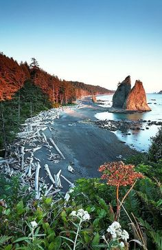Olympic National Park was a trip I really enjoyed. ---Sea stack at sunset, Rialto Beach, Olympic National Park, Washington Places To Travel, Places To See, Rialto Beach, Parque Natural, To Infinity And Beyond, Parcs, Washington State, Ruby Beach Washington, Forks Washington
