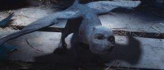 Eragon Saphira   Eragon - Dragons - UGO.com