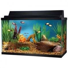 You went to the Pet Store, purchased the perfect 10 gallon aquarium kit, which probably inclued the tank, filter system, heater, aquarium top, light, fish net, and your first water conditioner sample. You purchase some gravel, a few fake plants, and...