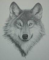 Wolf pencil sketch