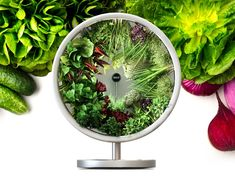 NASA-Inspired Indoor Garden Grows Vegetables Using Zero-Gravity Technology – Microgreens growing indoor Hydroponic Gardening, Aquaponics, Indoor Hydroponics, Hydroponics System, Container Gardening, Growing Veggies, Growing Microgreens, Crescendo, Plant Growth