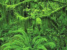 Fototapete tropen  Fototapete Nr. 3193 - Tropischer Regenwald, Costa Rica … | Pinteres…