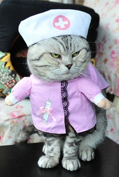 MaruPcat Turned Equipment Costumes Clothes for Halloween Laminated Cloth Polyester-cotton ^^ Check out this great image  : Cat Apparel