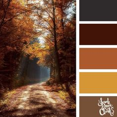 Afternoon autumn walk color palette | #fallcolorpalette #fall #colorscheme