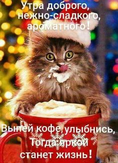 Good Morning Christmas, Good Evening Greetings, Happy Hippie, Cute Cats, Positive Quotes, Positivity, Day, Grinch, Peace