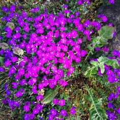 Currently Blooming 💜🌺 #garden #colour #flower #outdoors #irelandinthesun #ireland 🌞😎 Ireland, Bloom, Outdoors, Wellness, Colour, Garden, Flowers, Plants, Beauty