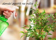 JAK NA MŠICE? EKOLOGICKY! - Zahrádkářův rok Herbs, Flowers, Plants, Gardening, Parsley, Food, Chemistry, Lawn And Garden, Essen