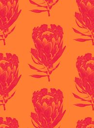 Flame-silk Protea/Homegrown by Design Team Fabric Patterns, Print Patterns, Protea Art, Africa Style, Africa Fashion, Cape Town, Repeat, South Africa, Printing On Fabric