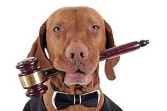 Should dogs have legal rights? The courts are seeing dogs in a different light these days, but man's best friend is still considered property under the law.