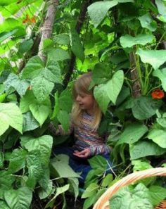 How to Grow a Child's Living Den or Playhouse With Willow | Dengarden