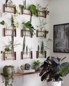 A Mobile Plant Shop Owners Muted Folky Boho Home - Plants On Wall - Ideas of Plants On Walls - Drawing inspiration from Hilton Carter I found myself at Michael's after Halloween and picked up what chemistry sets they had on post-holiday clearance. Room With Plants, House Plants Decor, Plants On Walls, Decoration Plante, Free Plants, Plant Shelves, Shelves With Plants, Plant Design, Interior Design Plants