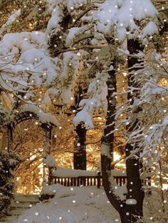 Snow , lights , trees