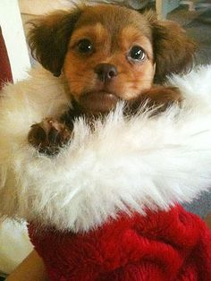 312 best christmas gone to the dogs images on pinterest