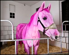 pink horses | OH I WANT ONE OF THOSE..... do you have one in purple to go along with ...