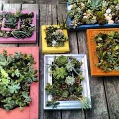 succulent wall art from old frames more minigardens succulents wall ...