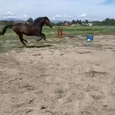 When jumping is in your blood! Horses Jumping Videos, Funny Horse Videos, Funny Horses, Cute Horses, Pretty Horses, Horse Love, Show Horses, Most Beautiful Horses, Animals Beautiful