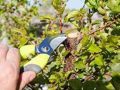 Pruning Shears, Garden Tools, Gardening, Gardening Scissors, Yard Tools, Lawn And Garden, Horticulture