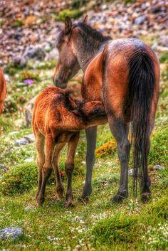 Annesinin kuzusu Horses, Photography, Animals, Photograph, Animales, Animaux, Fotografie, Photoshoot, Animal