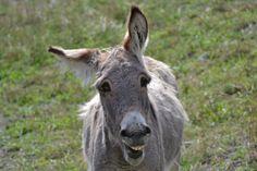 Grinning donkey by ~PhoenixAngel69 on deviantART