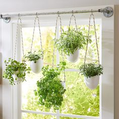 These 13 Herbs Will Thrive in Container Gardens Window Herb Planter Hanging Herb Gardens, Hanging Herbs, Vertical Gardens, Window Herb Gardens, Herb Garden In Kitchen, Diy Herb Garden, Kitchen Herbs, Window Plants, Indoor Window Planter