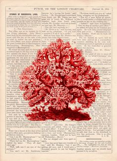 Coral Vintage Book Print Dictionary or Encyclopedia Page by PRRINT