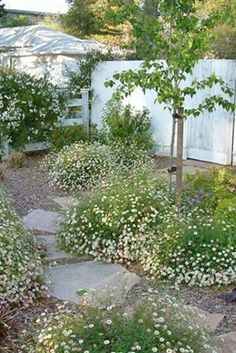 ideas for landscaping front yard california santa barbara - All For Garden Rustic Landscaping, Privacy Landscaping, Front Yard Landscaping, Landscaping Ideas, Santa Barbara, California Backyard, Southern California, California Ranch, Front Yard Decor