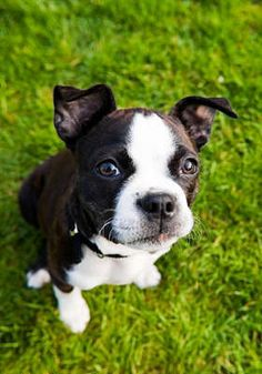 Robert Grey has some great inlightining tips for people raising a dog or for people wanting to buy a puppy.