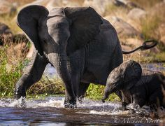 Playtime with Mom Elephants Never Forget, Save The Elephants, Baby Elephants, Cute Baby Elephant, Wild Elephant, Animals And Pets, Baby Animals, Cute Animals, Elephant Illustration