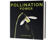 Scientific American is the essential guide to the most awe-inspiring advances in science and technology, explaining how they change our understanding of the world and shape our lives. Heather Angel, Carbon Sequestration, Scientific American, Trumpets, Different Plants, Plant Growth, Children's Literature, Colour Images, Botany