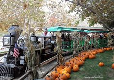Let's Play OC!: Pumpkin Patches at Irvine Park Railroad are Great Photo Ops! @Irvine Park Railroad