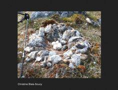 L'abondance de lemmings durant l'été 2013 expliquerait bien l'invasion de harfangs de cet hiver   Des nids garnis de dizaines de lemmings morts ont été observés sur l'île Bylot dans l'Arctique canadien.  (Photographie : Christine Blais-Soucy) #ornithologie #oiseaux #nature #canada