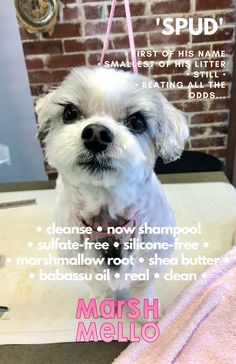 Fun!!!  #InterGroom is coming!  Apr.12-14/2019  NJ!  :D! Babassu Oil, Marshmallow Root, Shea Butter, Cleanse, Shampoo, Fun, Hilarious
