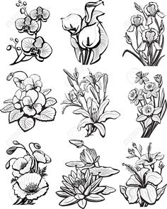 Set of sketches of flowers (flower, orchid, lotus)