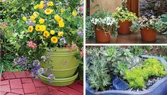 Container gardening tips.  Has links to different articles.