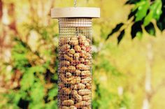 Offering peanuts is great for attracting a wider variety of birds and other wildlife. This DIY bird feeder makes it easy.