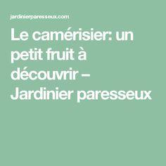 Le camérisier: un petit fruit à découvrir – Jardinier paresseux