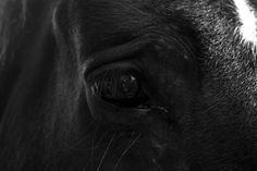 Farm Horse Photography, Travel Photo Poster, Wall Art Print, Photo of the day  - MOTIDEA by MOTIDEA on Etsy