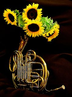 French Horn vs Sunflowers