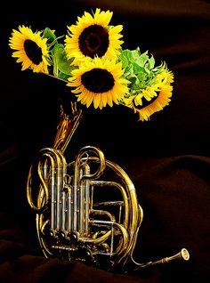French Horn vs Sunflowers