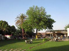 German Club in Khartoum. Used to swim here as a teen