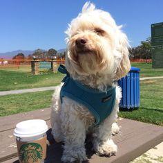 Basking in the sun at Girsh Park - Goleta, CA - Angus Off-Leash #dogs #puppies #cutedogs #dogparks #goleta #california #angusoffleash