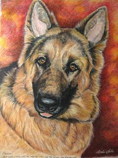 Colored Pencil Portrait of German Shepherd - Hans