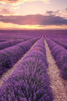 Your Perfect Week in Provence: The Ultimate 7-Day Road Trip Itinerary - Wind your way through Provence's fairytale villages and lakes, and you'll quickly realize why this region has captivated everyone from Brigitte Bardot to Vincent van Gogh. Sure, you could make the drive from Nice to Avignon in just a few hours, but why skip over those iconic fields of lavender and scores of medieval châteaux? This week-long itinerary will help you uncover some of Provence's best-kept roadside…