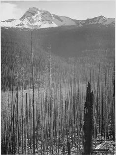 Burned Area in Glacier National Park, Montana by Ansel Adams
