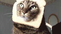 [움짤] 이보게 집사 양반 내가 빵을 달랬지만 이렇게 달란 건 아니였어